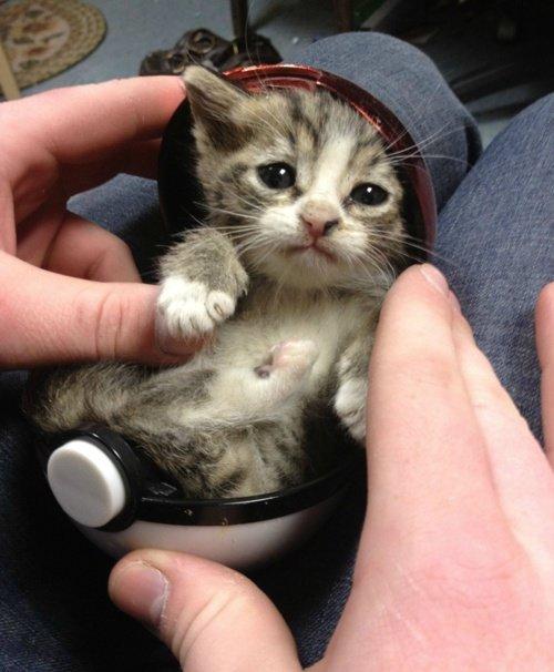 Kitten. . Kitten