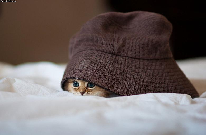 Kitty. . Kuv . ca Kitty Kuv ca