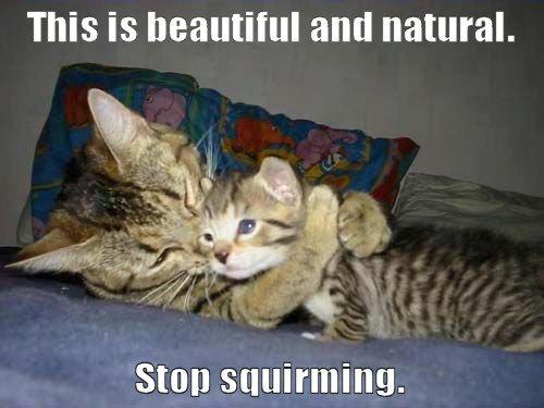 kitty rape. stop squirming haha. cat rapes Kitten lol Cute