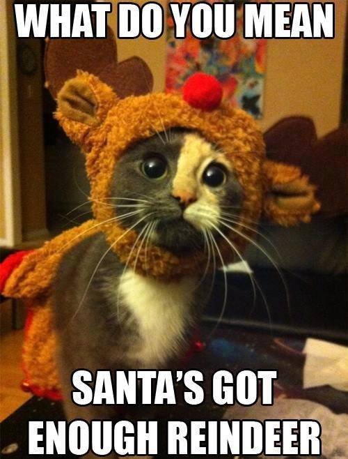 """kittydeer. . r. WHAT BO MEAN X spate"""" '3 kittydeer r WHAT BO MEAN X spate"""" '3"""