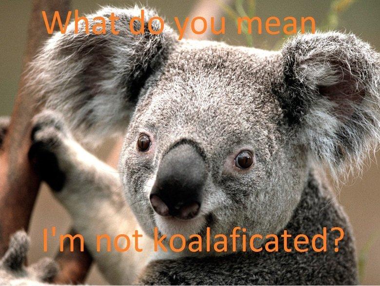 Koala. .. really?...koalaficated? it's koalafied! Koala really? koalaficated? it's koalafied!