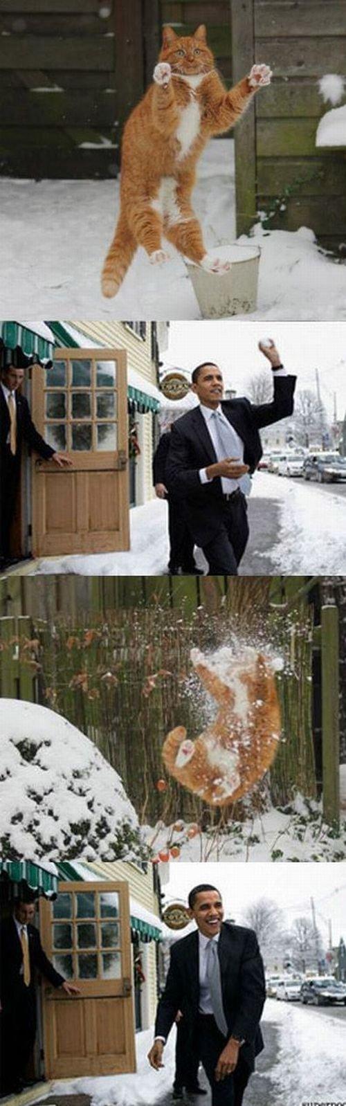 Obama harrasing cats. and enjoying it.. BOOM, headshot! asdasdasdasd