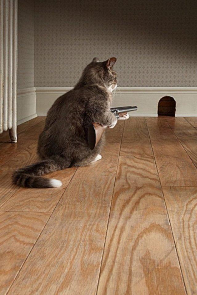 Oh, cats. .. Tom? Cats Mouse shoutgun