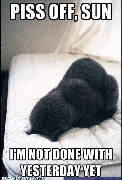 """""""oh god another cat post"""". So true.. perr, b alum , r ll WMM) ltl Btih. So true. cat sun sleep"""