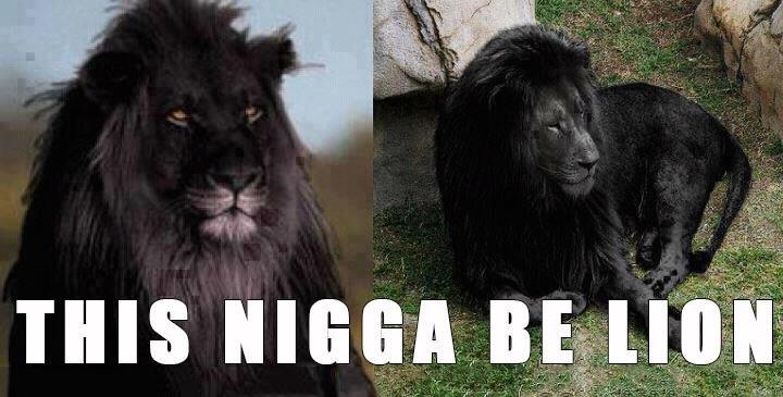 oh looook its snoop lion. .. Feel ya bro oh looook its snoop lion Feel ya bro