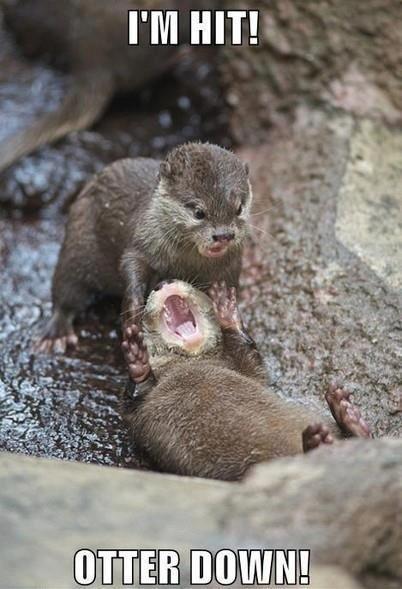 Oh nooo!. . otter need help