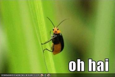 Oh hai. Haha.. aawwee :} hey hi hello Bug