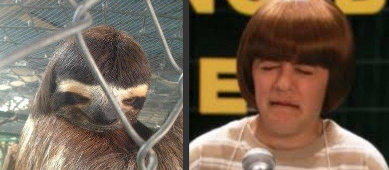Oh.. . sloths