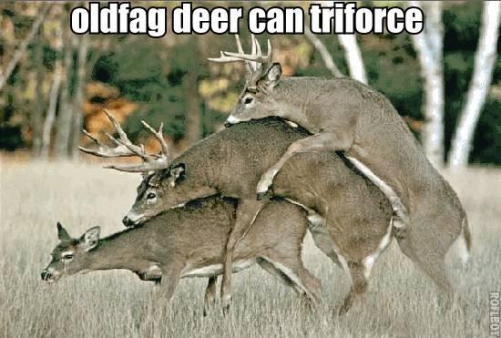oldfag deer can triforce. oldfag deer can triforce. thieir' '. lulz oldfag deer can