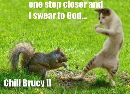 One Step Closer. . cat Squirrel