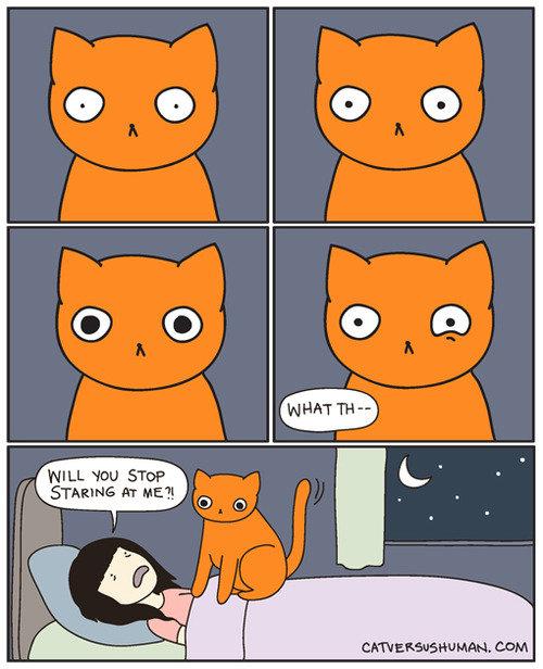 orange. . HILL 'mu orange HILL 'mu