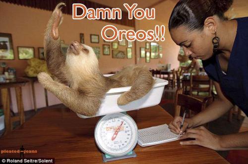 Oreos. Damn them..... pope of sloths approves Oreos Damn them pope of sloths approves