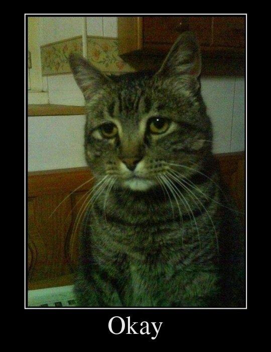 Sad cat. .