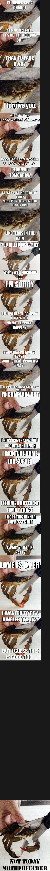 sad crab comp. .