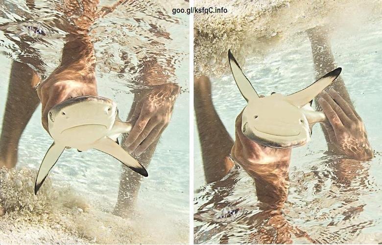 sad :). happy pikachu i swear, stahp. happy sad Shark animal Photoshop PIKACHU