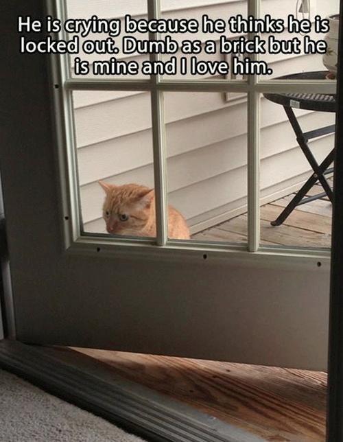 Sad kitty. . asdasdasdas