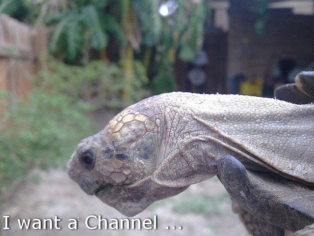 Sad Tortoise. Stop Speciesism. Support Tortoise rights.. tortoise turtles sad