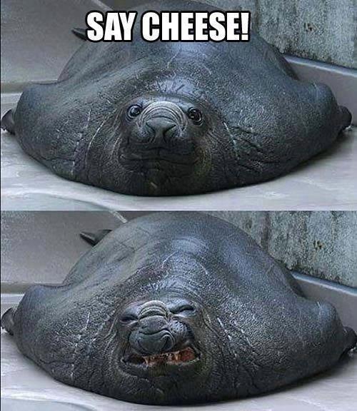 Say Cheese!. . Say Cheese!