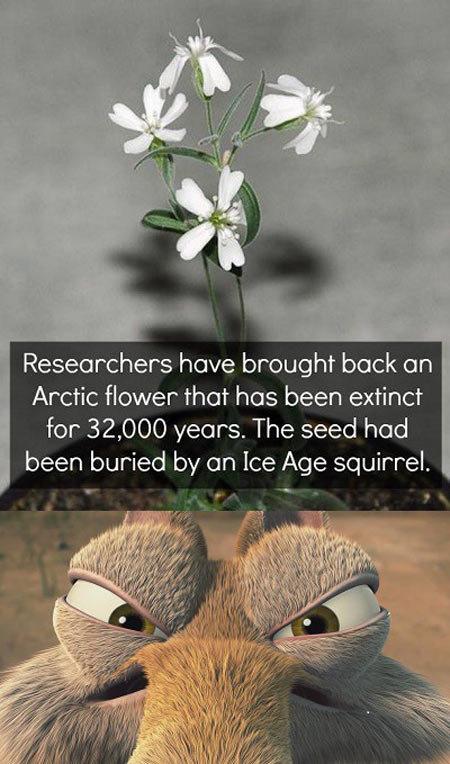 Scrat is not happy…. Scrat is not happy… geniusquotes.net/secret-of-change-soc.... Researchers have brought beck en Arctic flower than has been extinct for 32,  funny