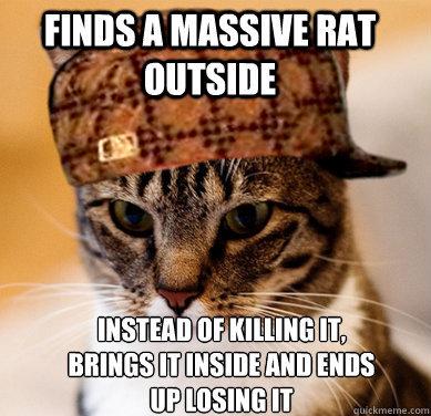 Scumbag Cat. First OC I've uploaded in a long time.. I: _ IRS A MASSIVE mu Scumbag cat Rat
