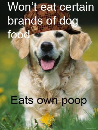 Scumbag dog.. . Won' t eat certain Scumbag dog Won' t eat certain