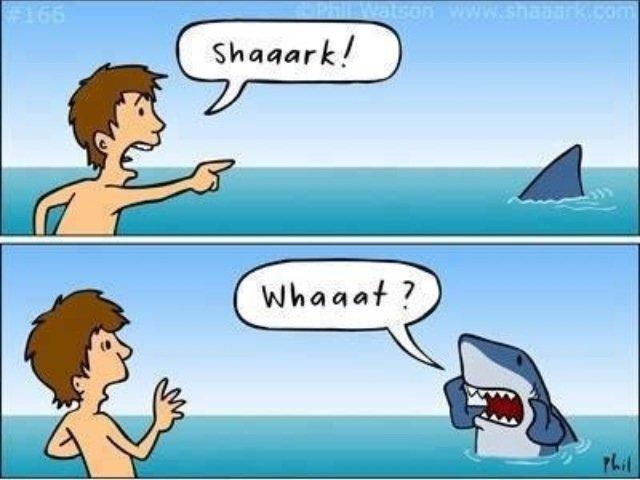 Shaaaaaarrrrrkkkk. Not sure if its a repost, but i love sharks. Shark