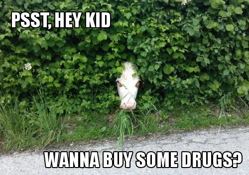 Shady Cow. . Shady Cow