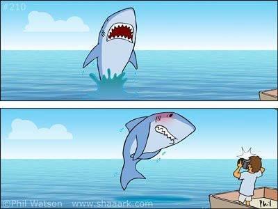 Shark, you so silly.. . Shark you so silly