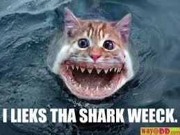 SHARK WEEK. . Cats sharks Shark week