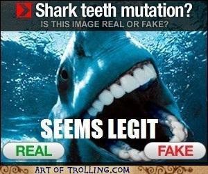 """Shark Mutation. . 1 in qt. HOLT OF """"Rei I IHE-"""" LEM ait. /. ii: raam. #1 if that were real, I WOULD WANT IT Shark Boobs legit"""