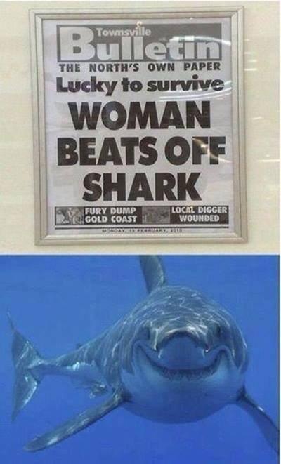 Sharks Everywhere are Laughing. . Gain cans':. >fury dump woman Shark beats newspaper