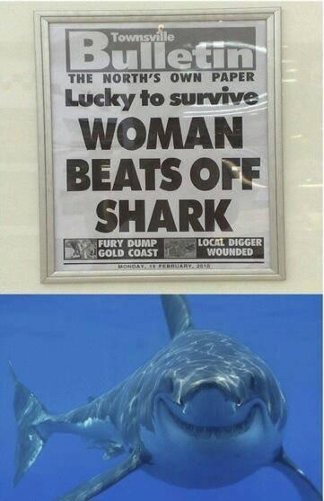 Sharks. . F FURY DEM? Ltot: ltk BIGGER Sharks F FURY DEM? Ltot: ltk BIGGER