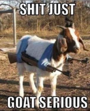 Shit just. goat serious. BUM SERIOUS. Why don't you go Baaaaaaaaaaaaaaaaaaaack where you came from, then? Shit just goat serious BUM SERIOUS Why don't you go Baaaaaaaaaaaaaaaaaaaack where came from then?