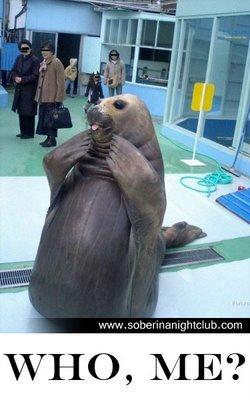 Silly walrus. U so silly. silly walrus is so