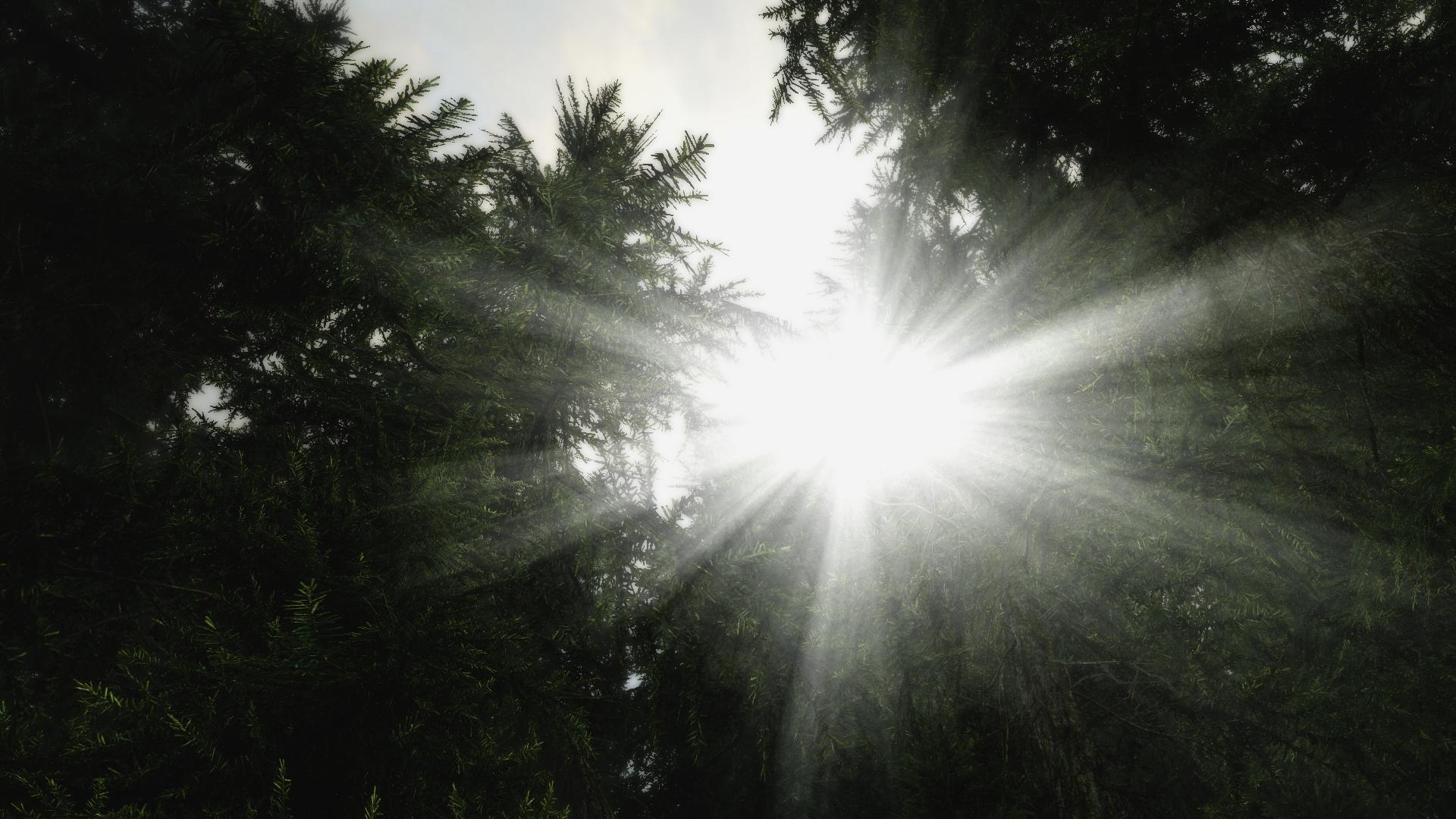 Skyrim. yes, this is skyrim.. gee willikers batman skyrim trees sun