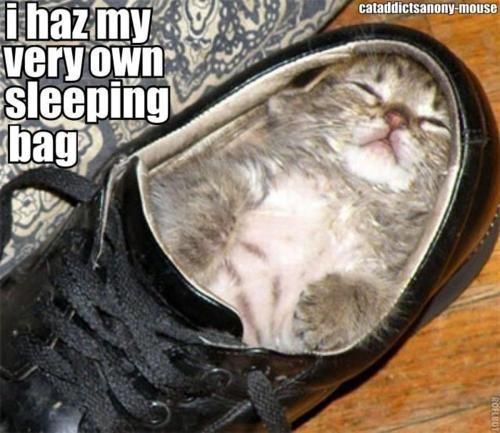 Sleepy Kitty. . Sleepy Kitty