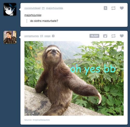 Sloth porn. . Sloth porn