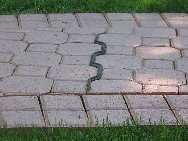 Snake. .. wut Snake wut