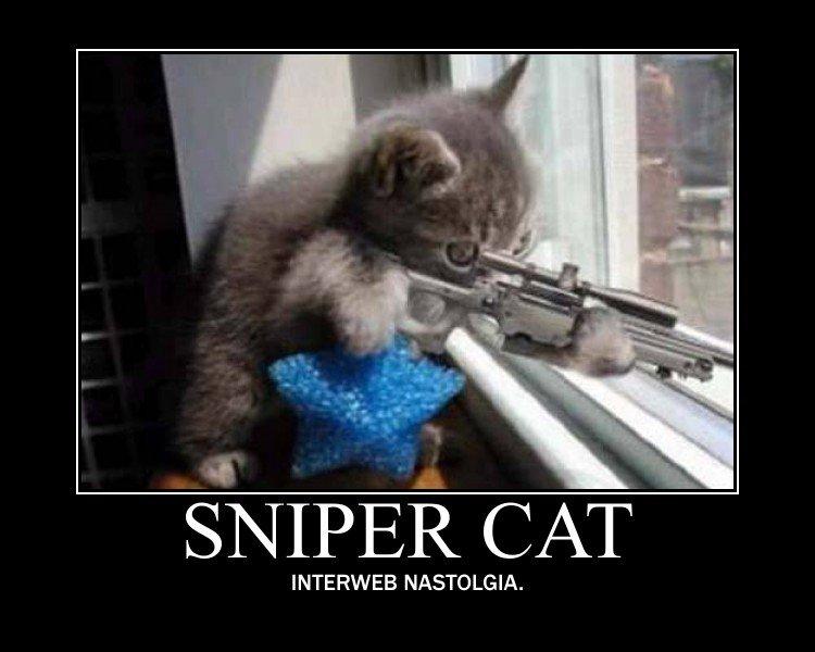 Sniper cat. . SNIPER CAT INTERWEB .. This is the funny junk I remember! Sniper cat SNIPER CAT INTERWEB This is the funny junk I remember!
