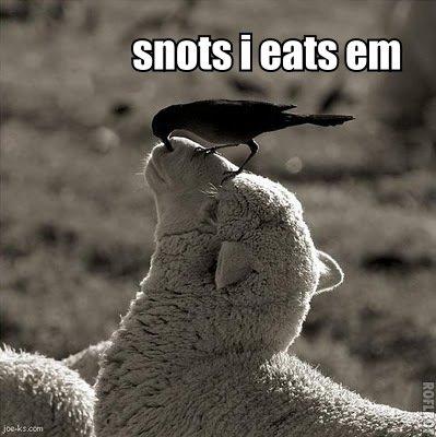 snots i eats em. snots i eats em yum yum. I ENS em. That is Dolly! snots i eats em