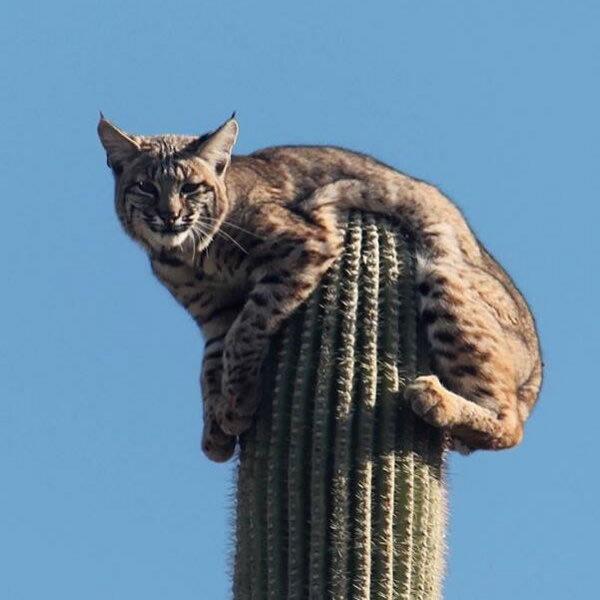 So cats WILL lay anywhere. Hi.. Mods are asleep, post Khajits hello friend