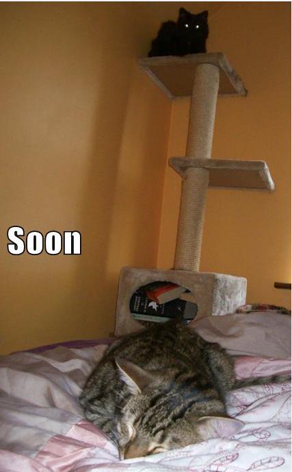 Soon. OC of my own kitties. SON] No U