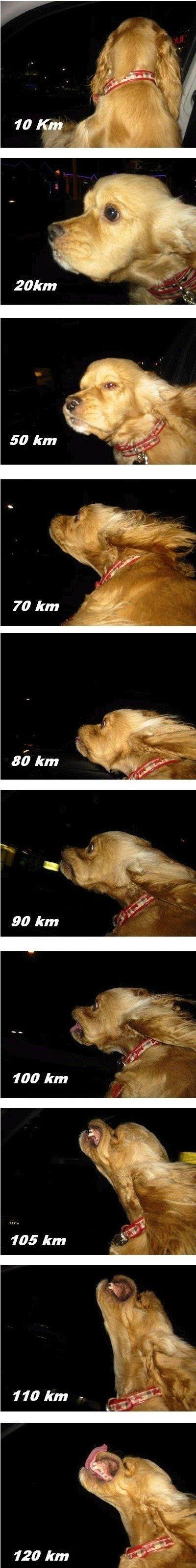 Speedy Dawg. . 90 km. at 90k it looks like his drinking Speedy Dawg 90 km at 90k it looks like his drinking