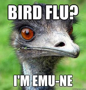 squawk. . squawk