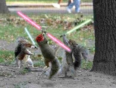squirrel wars. . Squirrel star wars