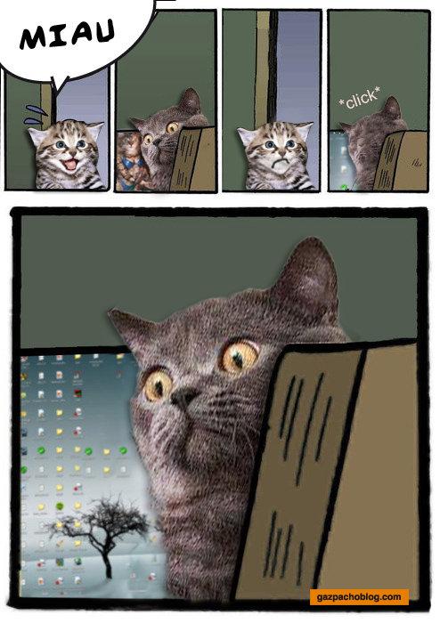 stare cat. .. Just great stare cat Just great