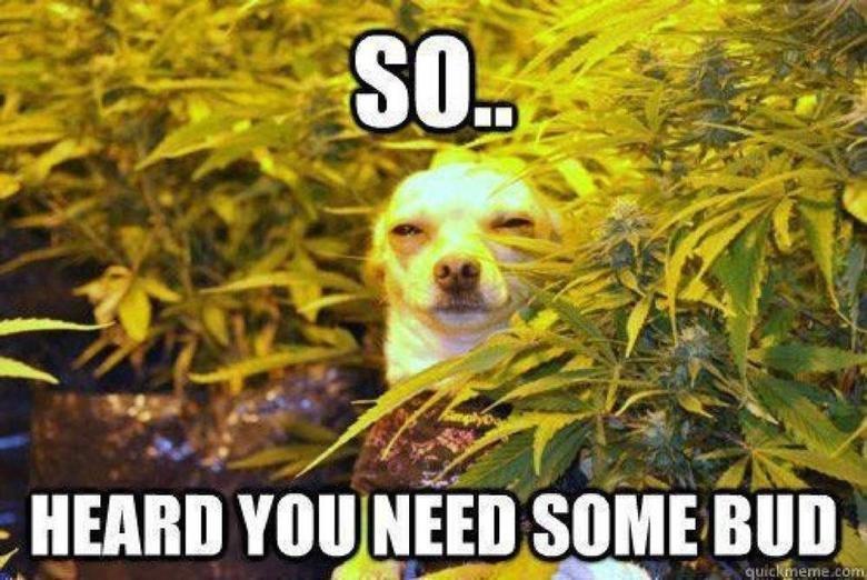 Stoner dog. . Janna. Yes... yes... I do... Stoner dog Janna Yes yes I do