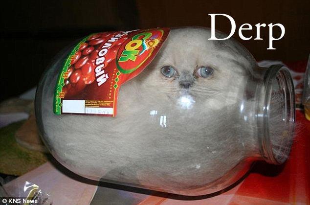 Stupid Cat 3. . Stupid Cat 3