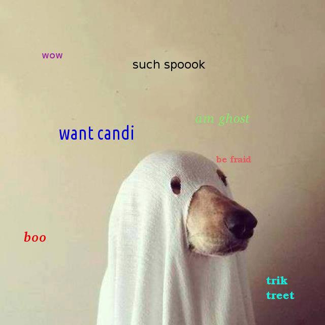 such Halloween. happy Halloween fj. aall boo such Halloween happy fj aall boo