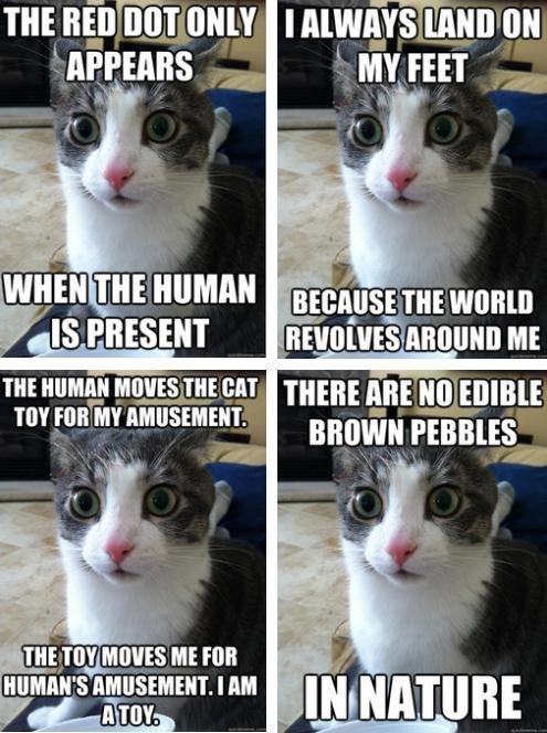 Sudden Clarity Cat. . Iii, PRESENT (ll.' ME ulmers. Cat thread. Sudden Clarity Cat Iii PRESENT (ll ' ME ulmers thread